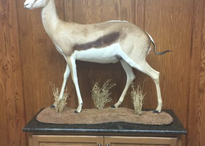 World Record Book SCI Common Springbok