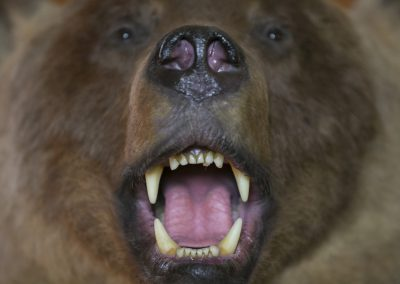 Bear Mouth