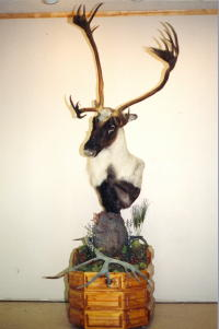 Caribou Pedestal Mount Custom Aggressive Alteration