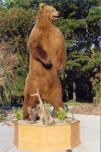Kodiak Brown Bear 10FT