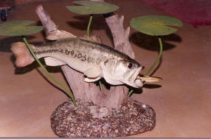 Large Mouth Bass Table Mount With Lilly Pads