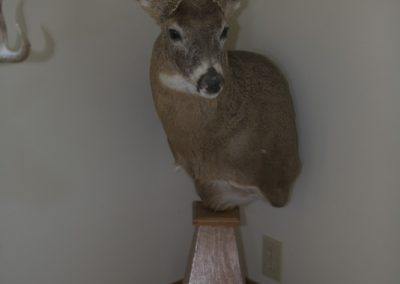 Whitetail Pedestal