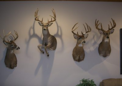 Whitetail Collection