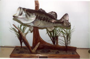Reproduction of Alabama State Record Eighteen and a Half Pound Large Mouth Bass