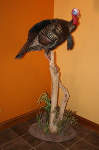 Turkey on Pedestal