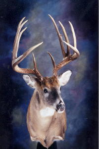KY State Record Whitetail