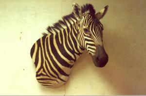 Zebra Wall Pedestal